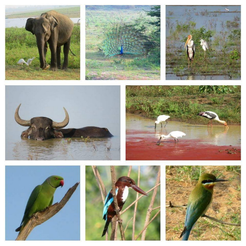 Photos du Sri Lanka 9