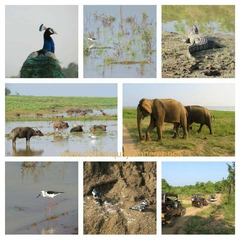 Photos du Sri Lanka 8