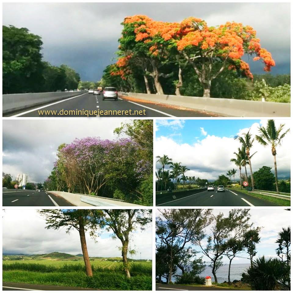 Découverte de l'Ile de la Réunion 11