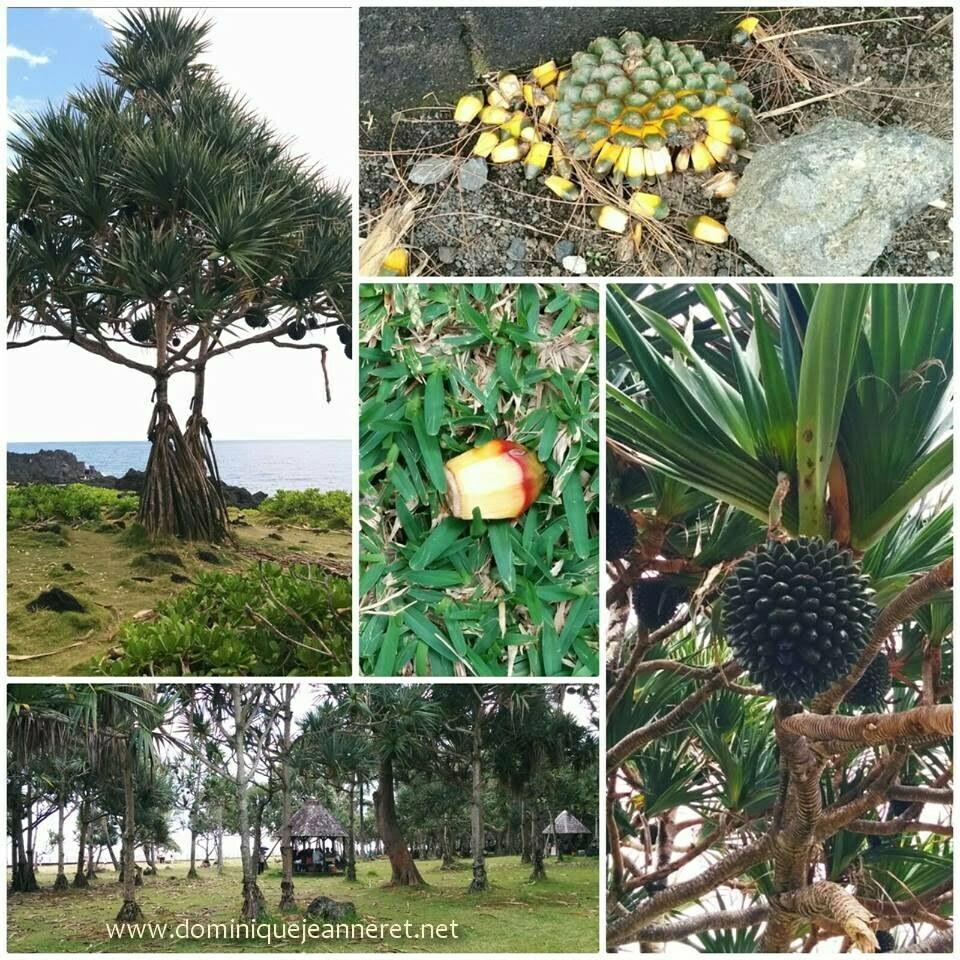 Découverte de l'Ile de la Réunion 10