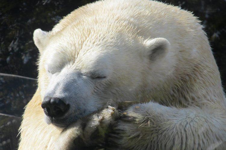 Hibernation et solitude ressourçantes 8