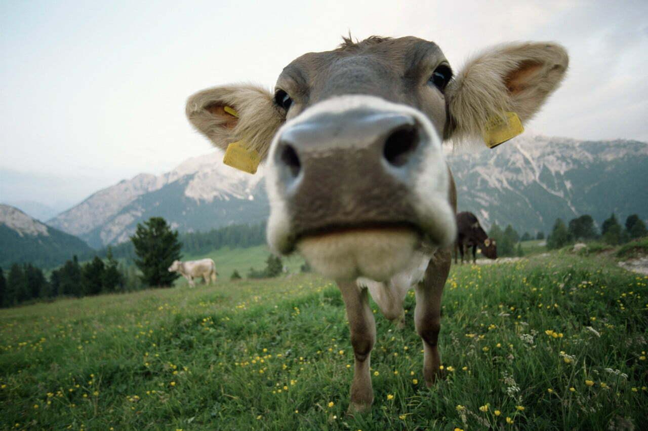 Manger de la viande en conscience 1