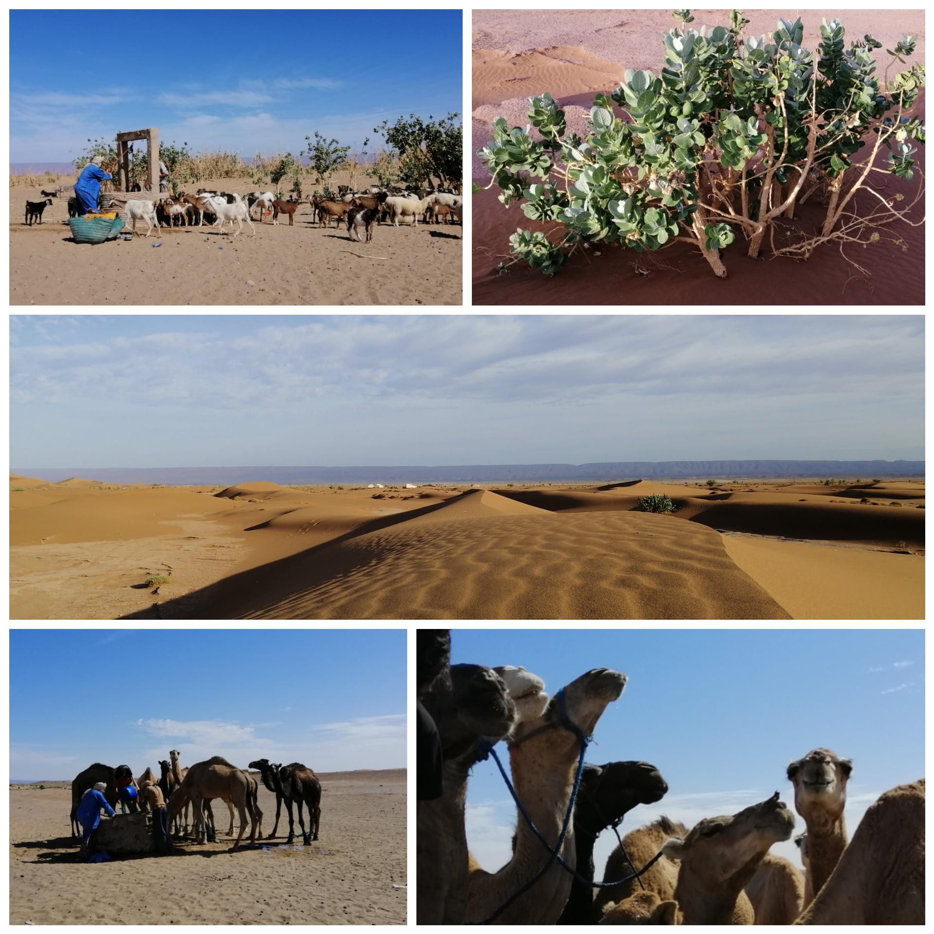 15 au 26 février 2021 : Voyage culturel et de ressourcement dans le désert au Maroc 10
